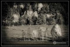 Fot.-Tadeusz-Bilozor-Las-II