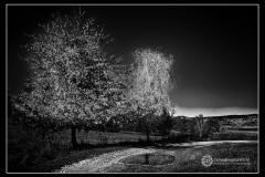 Fot.-Tadeusz-Bilozor-xxx