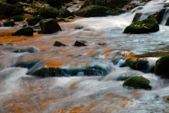 jaworski_waldemar_zloty-potok