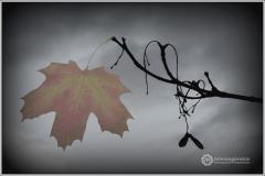 1-Jan-Foremny-Ostatni-jesienny-lisc-