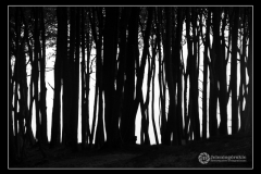 Fot.-Tadeusz-Bilozor-Las
