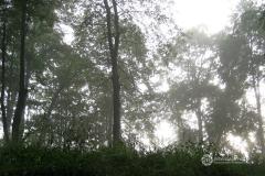 deszczowy-las